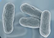 구강유산균 OraCMU